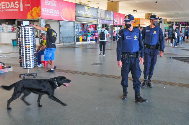 Policiamento com cães, o diferencial no combate às drogas
